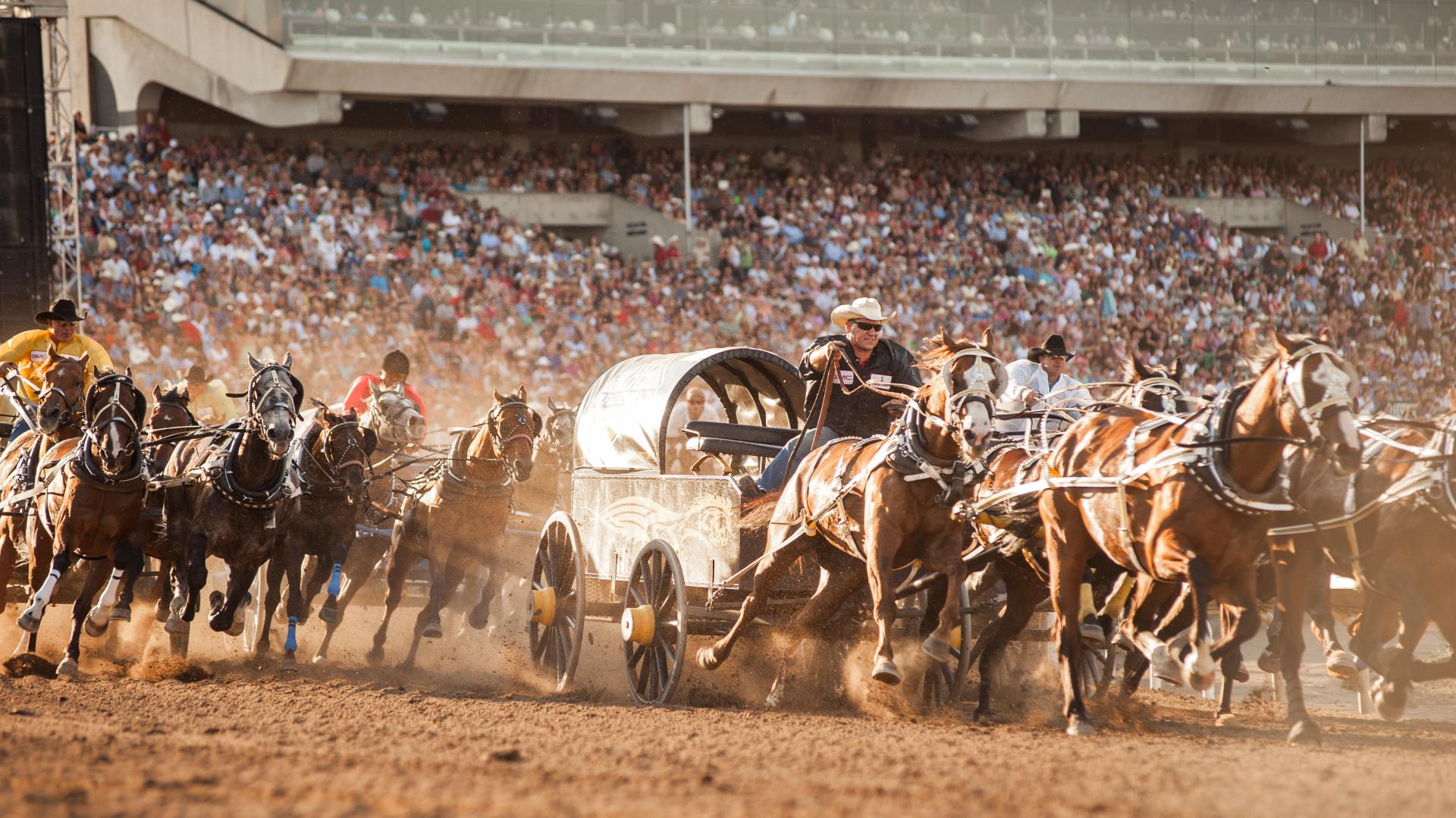 Calgary Stampede Tailor Made Holiday July 5 14 2019